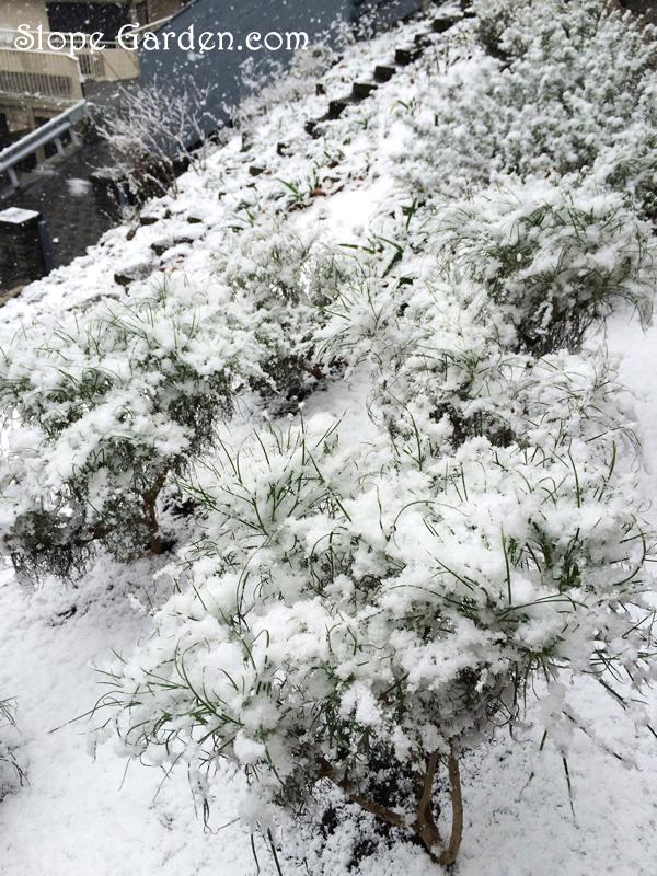 sg_snow.margalet