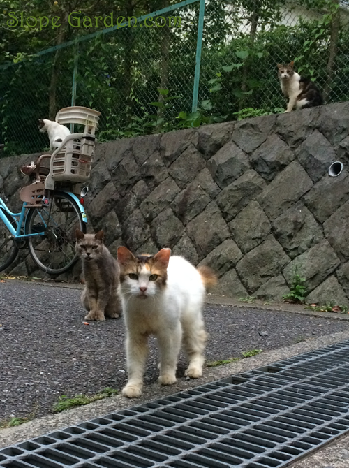 sg_cats
