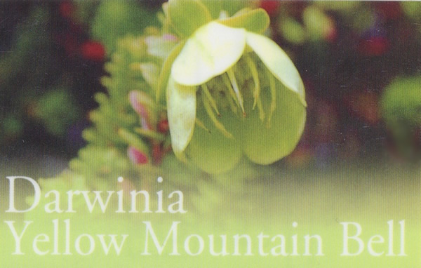 sg_darwinia.yellowmountain.bell
