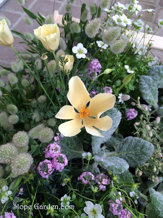 sg_flower.box_12