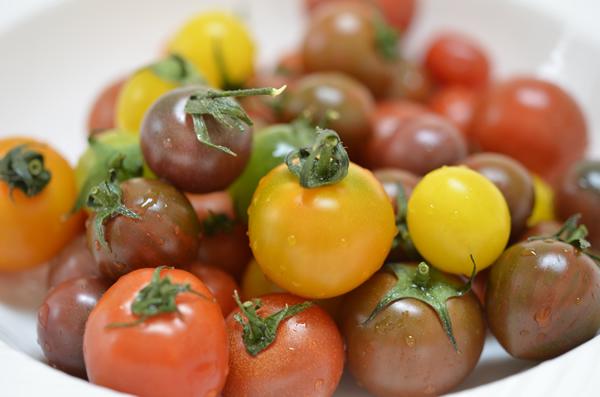 sg_tomato_colorful_1